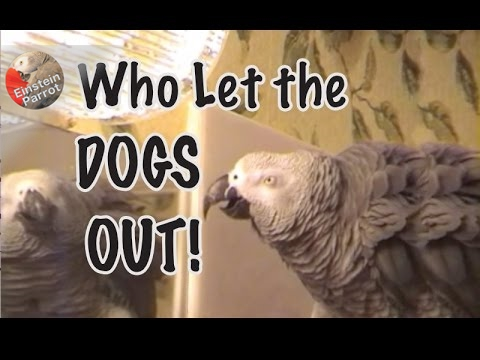 """Einstein sings, """"Who Let The Dogs Out""""  – Long Version"""