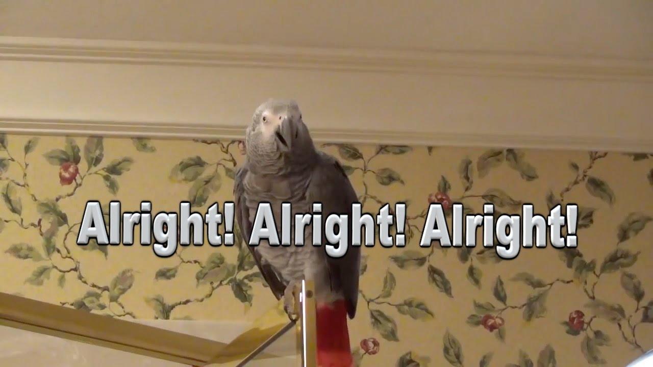 🔴🐦Einstein  Parrot LIVE!