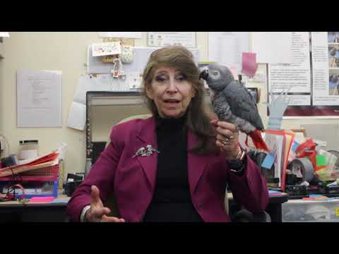 Irene Pepperberg Interview 1 – Experiment Background